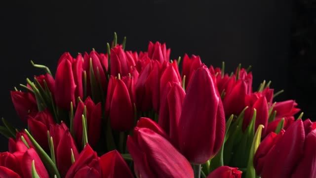 vídeos de stock, filmes e b-roll de ramalhete de botões cor-de-rosa vermelhos bonitos - punhado