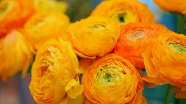 A bouquet of orange Ranunculus flowers on a light background