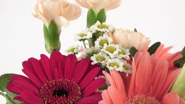 Bouquet of red gerberas and flowers isolated on a white background. Birthday card. video