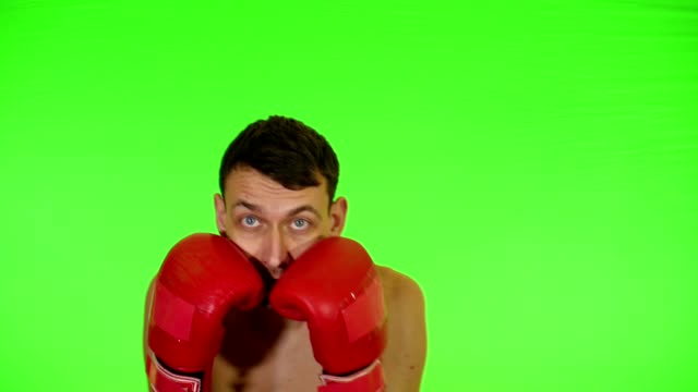 Boxer Boxing on a Green Screen video