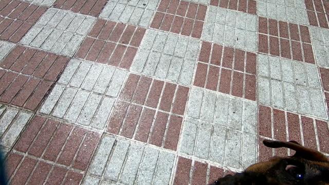 ボクサー犬はロープをかむ - 叙情的な内容点の映像素材/bロール