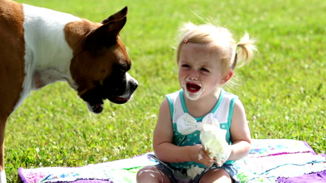 Boxer dog, little girl and ice cream cone Boxer dog eats little girls ice cream cone and then the little girl continues to have her cone.  This beautiful toddler displays the beauty of innocence. ice cream stock videos & royalty-free footage