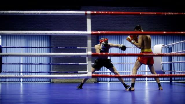 boxer durante lotta nel anello - dedizione video stock e b–roll
