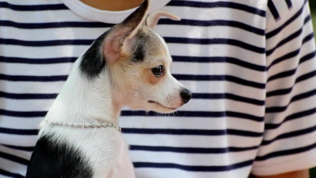 boy and chihuahua dog. video
