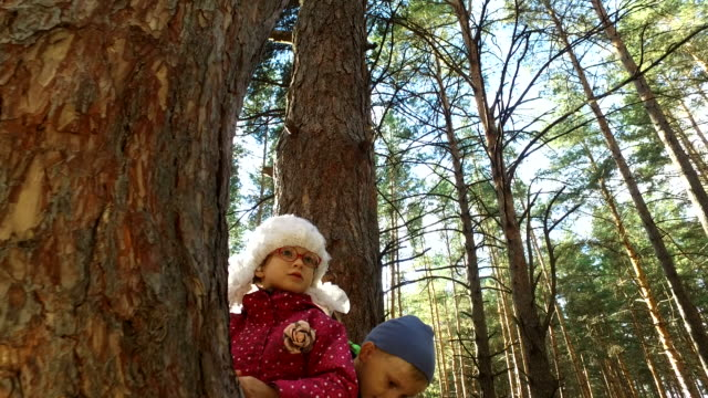 Boy and girl sitting on a large tree. The children have planted on pine tree and they are happy. Sunday holiday with children in the park. video