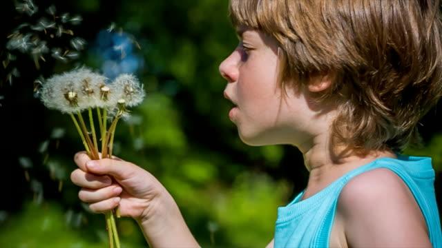 Boy blowing dandelion seeds video