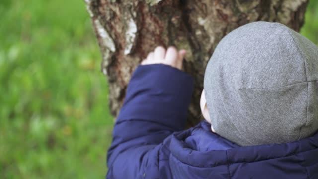 boy child touches a tree - ludzka kończyna filmów i materiałów b-roll