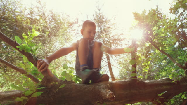 boy climbing a fallen tree in sunshine - albero caduto video stock e b–roll