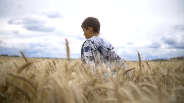 boy goes on a golden wheat field slow motion video