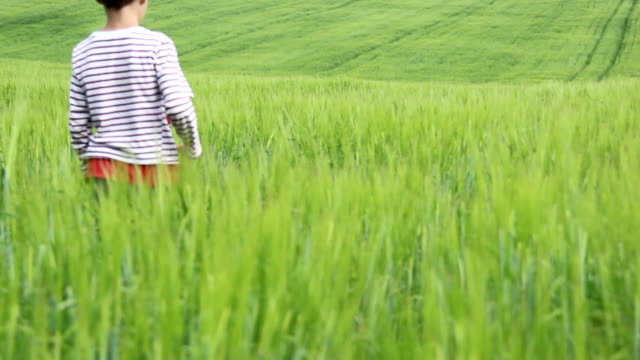 boy goes on a high green grass in the field video