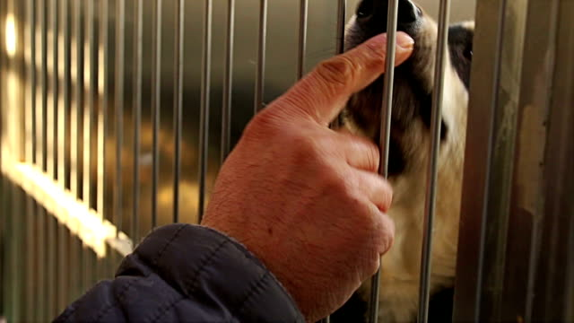 Boy hand playing with sad puppy dog in shelter giving hope to be rescued and adopted to new home.