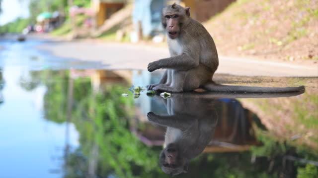 boy handsom - makak maymunu stok videoları ve detay görüntü çekimi