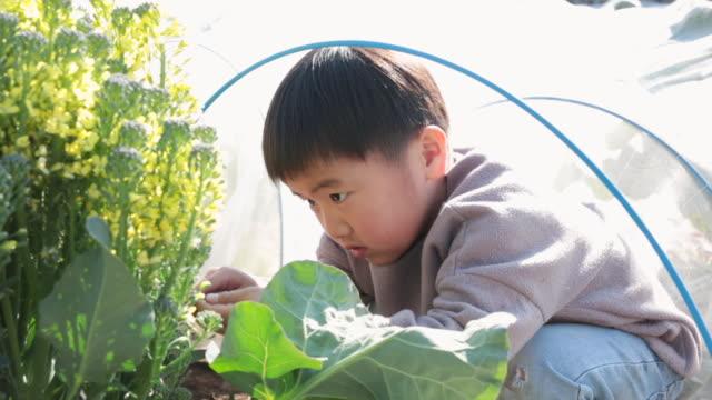 畑で野菜を収穫する少年 - environmentalism点の映像素材/bロール