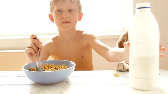 vídeos de stock e filmes b-roll de boy having breakfast of cornflakes with milk and his dog is interested - granola