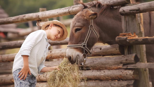 Boy in the straw hat feeding a stack of hay to a donkey at the farm