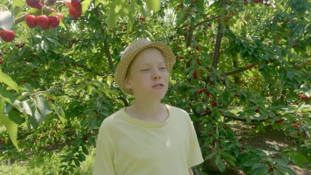 pojken plockar körsbär och äter dem i den gröna körsbärs trädgården på sommaren solig dag. - skylift bildbanksvideor och videomaterial från bakom kulisserna