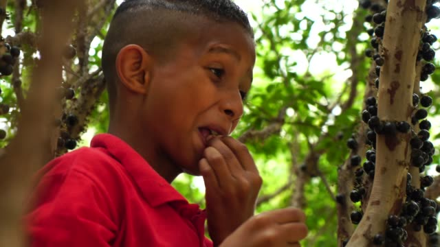 Boy on the tree eating Jabuticaba fruit