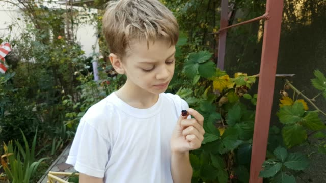 Boy picking and eating berries in garden video