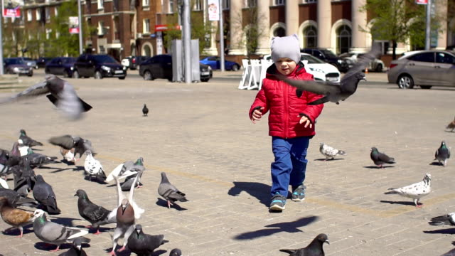 Boy playing with doves birds in city park. video
