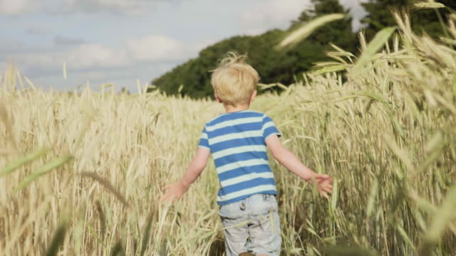 Boy running through wheat Boy running through wheat field in summer denmark stock videos & royalty-free footage