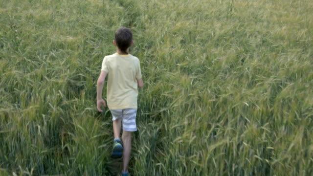 boy runs along the wheat field video