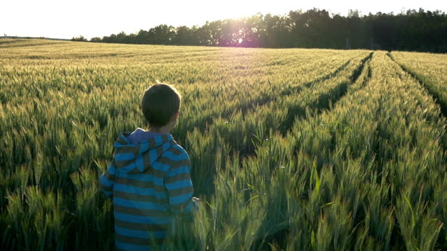 boy runs on a wheat field at sunset slow motion, Sun rays, view from above video