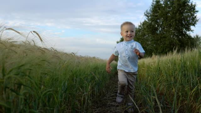 Boy runs through a wheat field, happy childhood