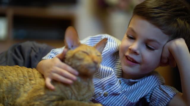 じゅうたんの上に横たわっている猫をなでる少年。 ビデオ
