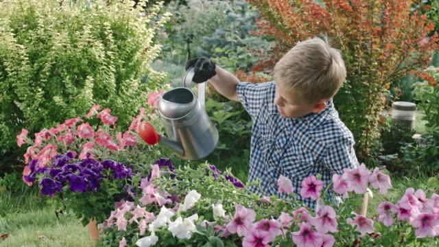 Garçon d'arrosage des fleurs dans le jardin - Vidéo