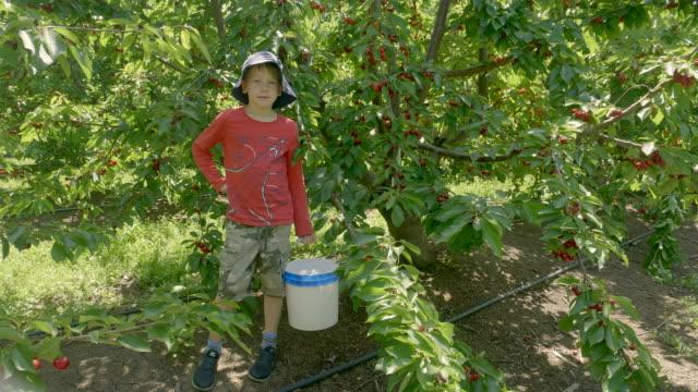 pojke med korg av körsbär i den gröna körsbärs trädgården på sommaren solig dag. - skylift bildbanksvideor och videomaterial från bakom kulisserna