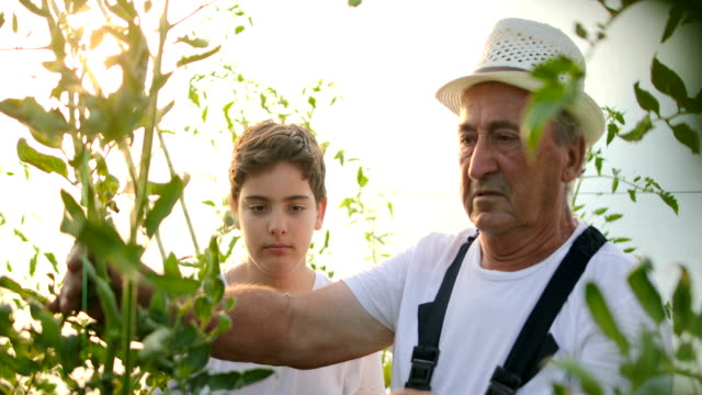 boy with grandfather gardening. - vegan stock videos and b-roll footage