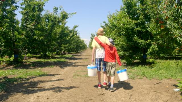 pojkar går tillsammans med hinkar full av körsbär i händerna i den gröna körsbärs trädgården på sommaren solig dag. - skylift bildbanksvideor och videomaterial från bakom kulisserna