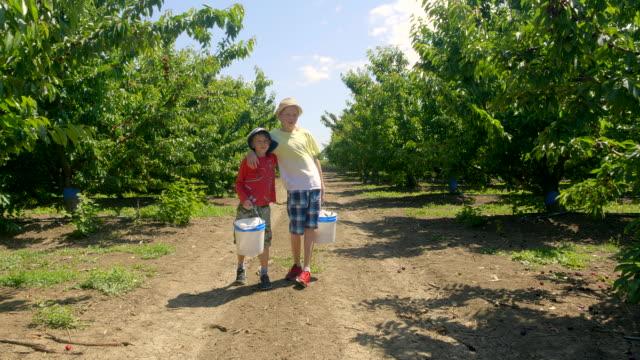 pojkar med korgar fulla av körsbär i den gröna körsbärs trädgården på sommaren solig dag. - skylift bildbanksvideor och videomaterial från bakom kulisserna