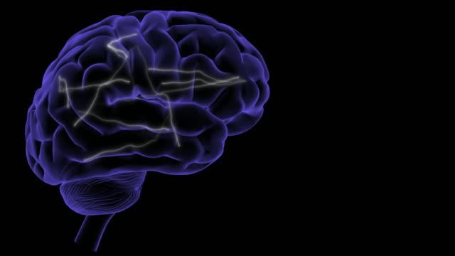 Brain activity. - vídeo
