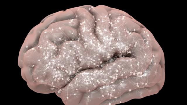 Mosca através de cérebro - vídeo