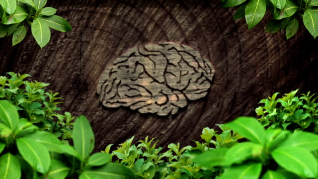 脳の森 - 家系図点の映像素材/bロール