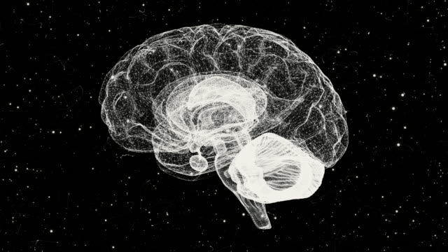 Brain from a Particle Vortex video