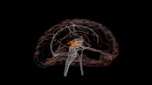 3D Brain Loop video