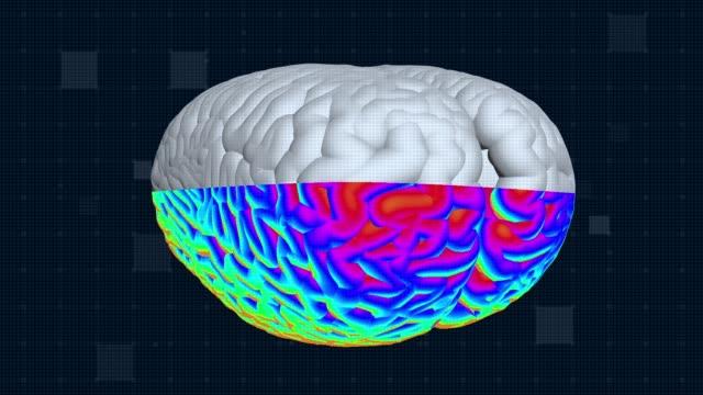 Brain MRT scan. Full HD medical background Brain MRT scan. Medical GUI background. Seamless looping cerebellum stock videos & royalty-free footage
