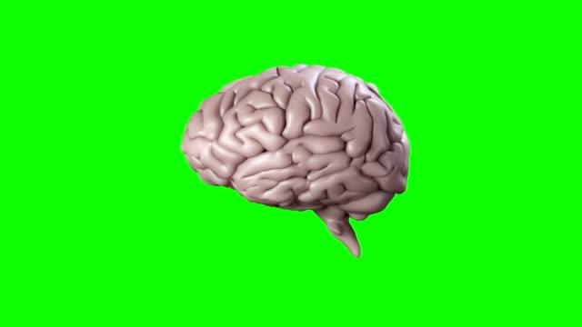 stockvideo's en b-roll-footage met brain spinning on green screen background - brain