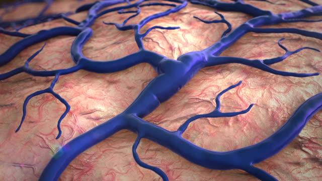 brain surfase video