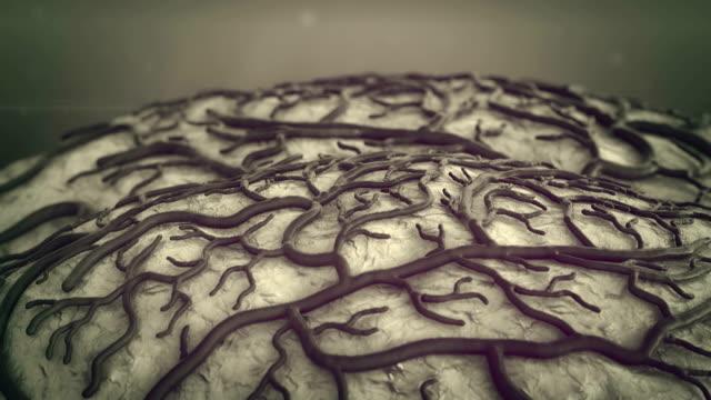 brain Brain Model,brain surfase, insult, circulatory system, disease, Capillary, death of brain  cerebellum stock videos & royalty-free footage