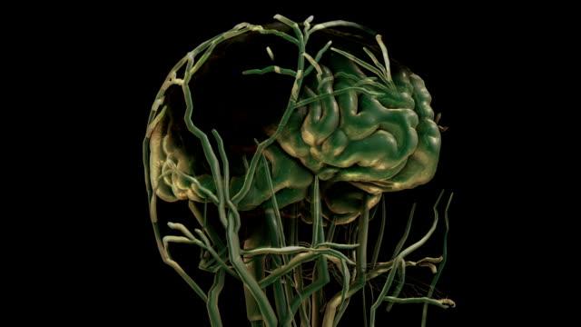 brain visualization concept video