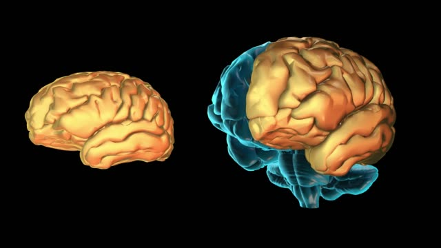 vídeos de stock e filmes b-roll de brain-left hemisphere - cerebelo