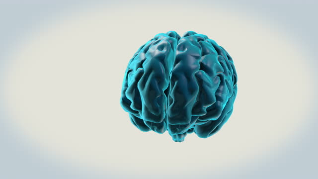 vídeos de stock e filmes b-roll de brain-pons on a white background - cerebelo