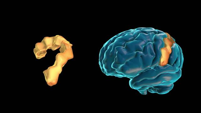 vídeos de stock e filmes b-roll de brain-postcentral gyrus - cerebelo