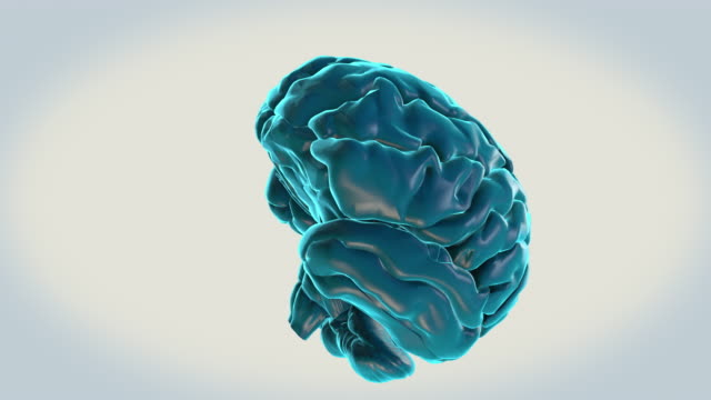 vídeos de stock e filmes b-roll de brain-red nucleus on a white background - cerebelo