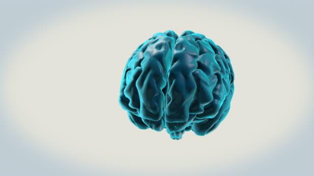 vídeos de stock e filmes b-roll de brain-right hemisphere on a white background - cerebelo