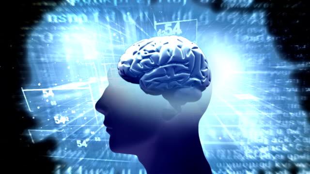brainstorming - inneres organ eines tieres stock-videos und b-roll-filmmaterial