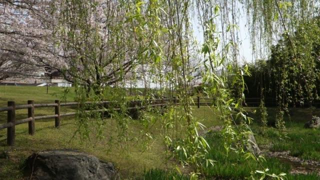 風に揺れる柳の枝 - 土手点の映像素材/bロール